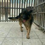 پانسیون سگ ونگهداری..اموزش رایگان